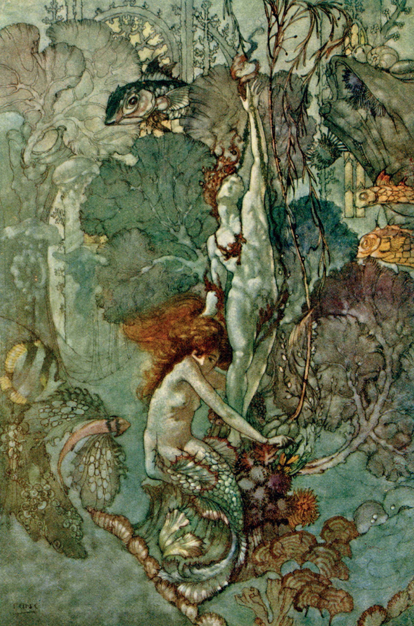 The Little Mermaid illustration by A. Duncan Carse